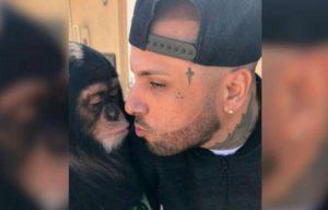 Nicky Jam criticado por besar chimpancé